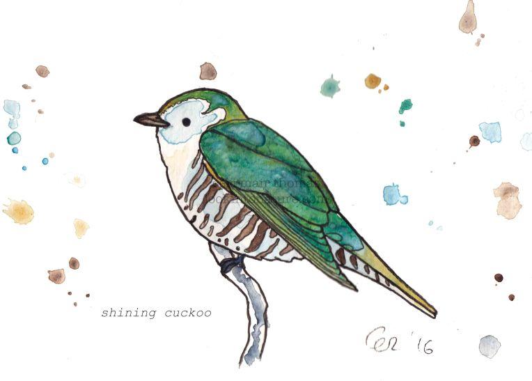 c cuckoo