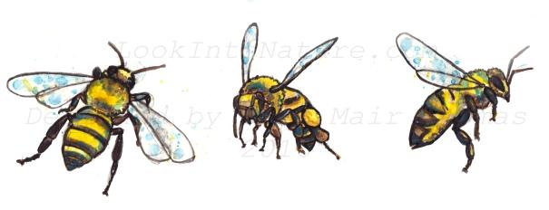 C honeybee