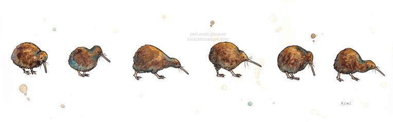 c kiwi