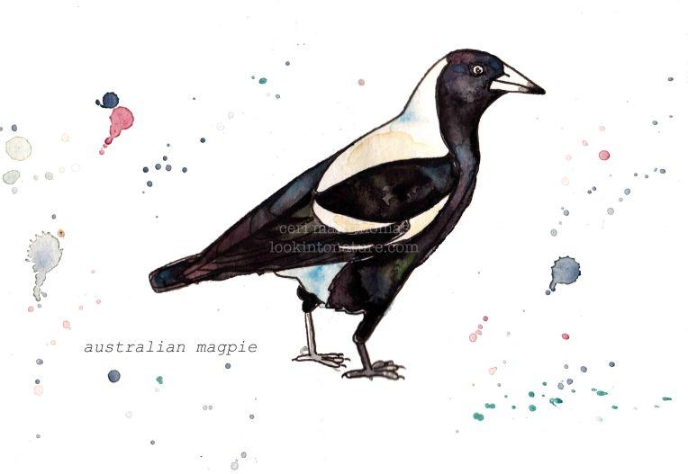c magpie