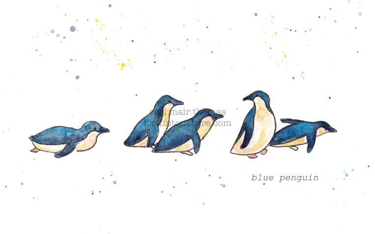 c penguin