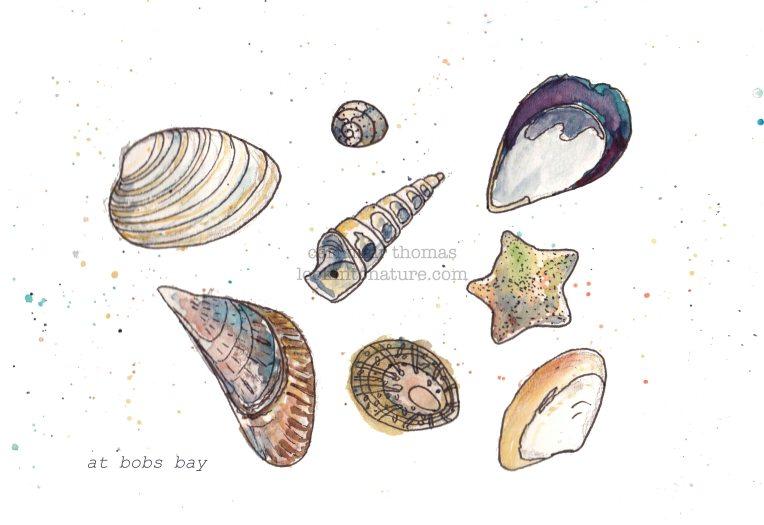 c shells