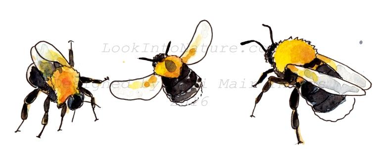 C tree bumblebee