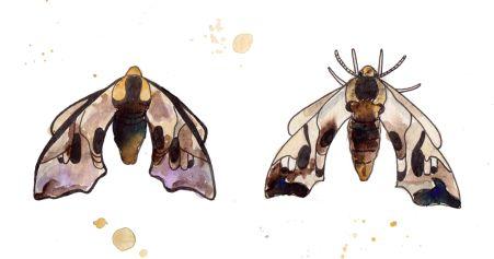 moth_0001