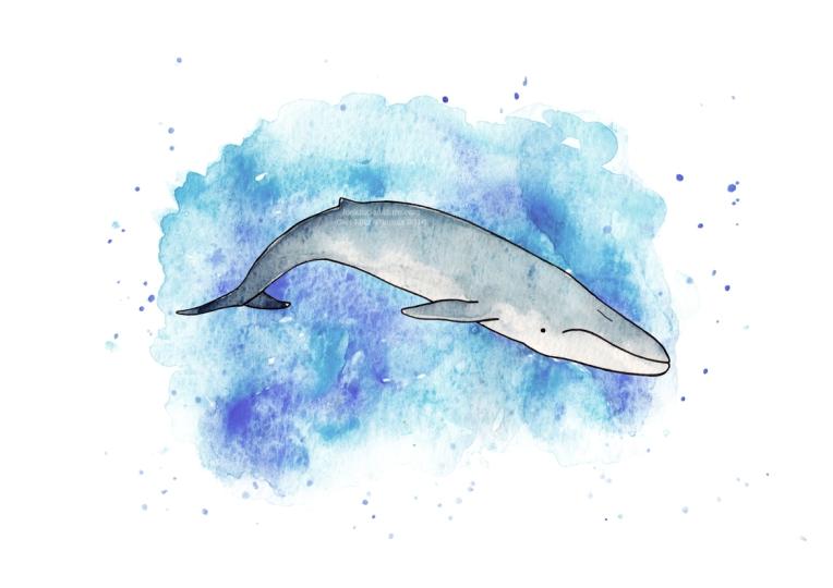blue whale web