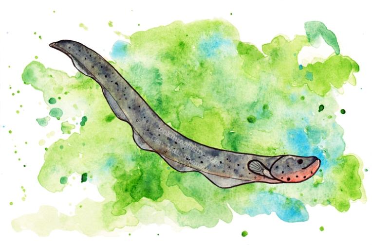 eel web