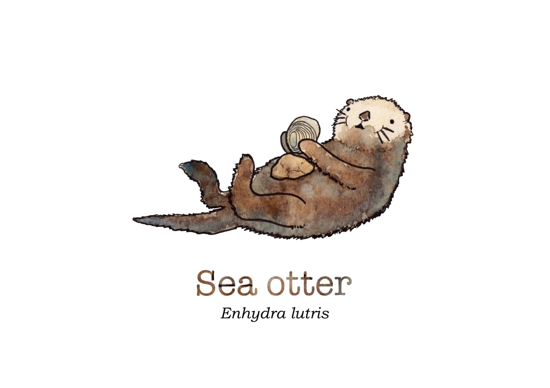 tiny sea otter with name