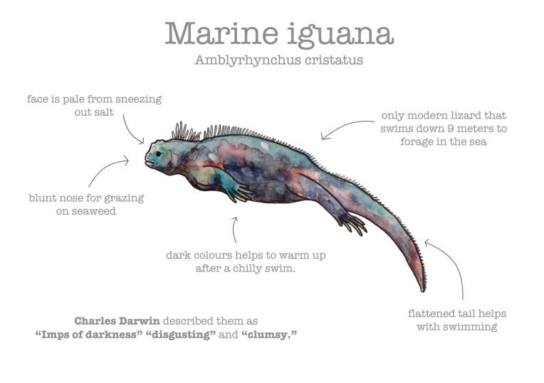 iguana-facts