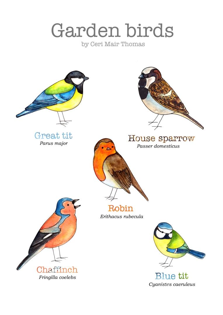 5-birds-web