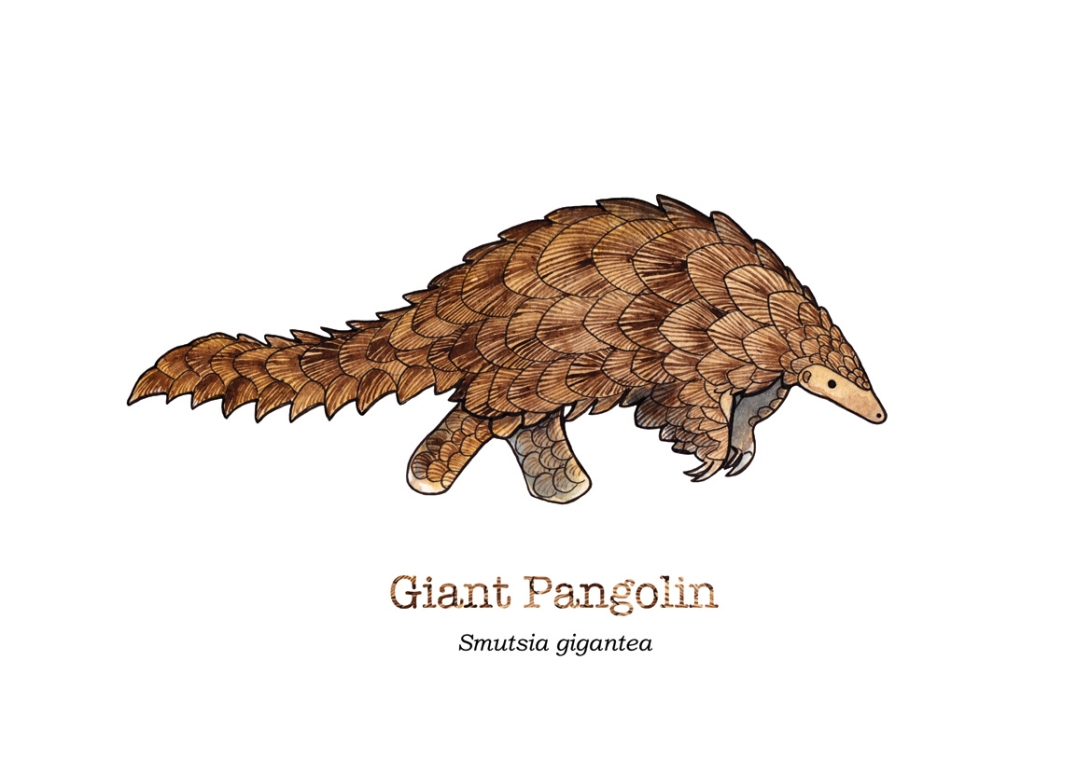tiny-pangolin-name