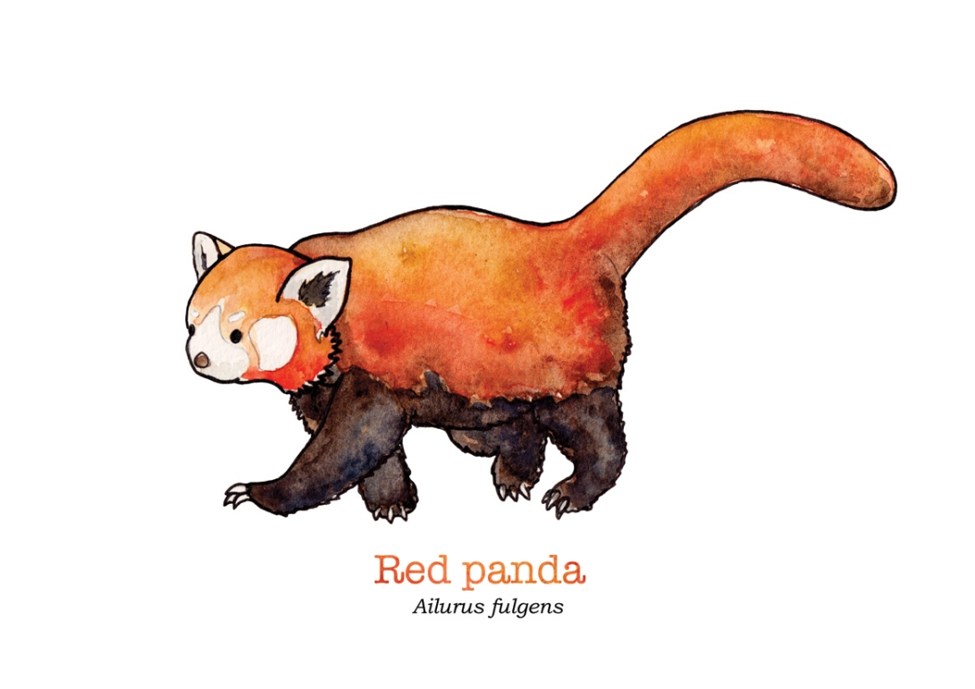 tiny-red-pandawith-name