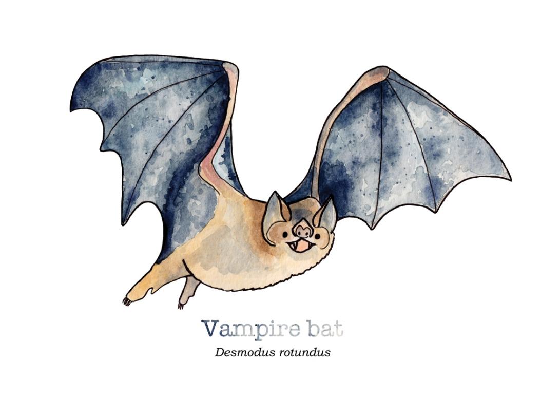 tiny-vampire-bat-with-name