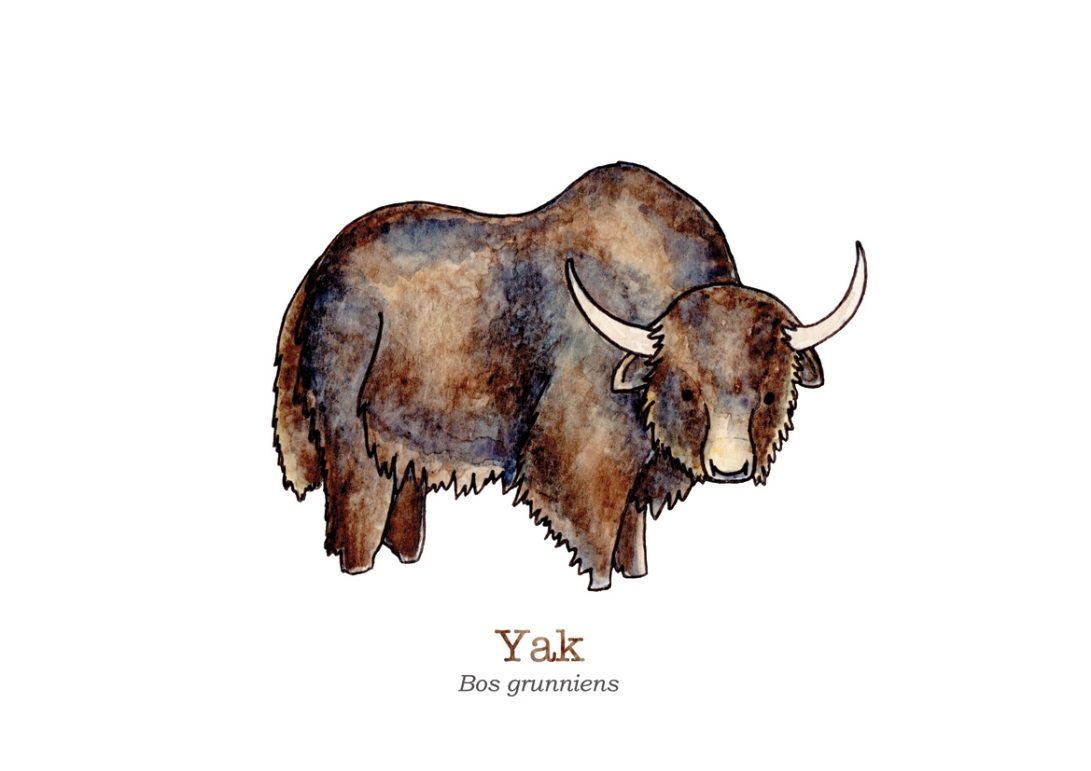 tiny-yak-with-name